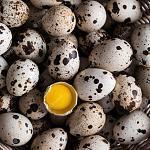 Нажмите на изображение для увеличения Название: one-cracked-quail-egg_23-2148601030.jpg Просмотров: 4 Размер:180.9 Кб ID:13506805